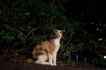 ネコだと思えば腹も立たない(ーー゛)