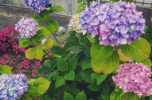 咲いた花は思い出と共に未来に繋がる